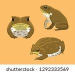 Australian Animal Cane Toad...
