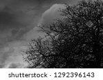 silhouette dead tree  on dark...   Shutterstock . vector #1292396143