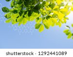 plants background with... | Shutterstock . vector #1292441089