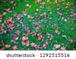 beautiful landscape with maple... | Shutterstock . vector #1292515516