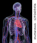 3d rendered medically accurate...   Shutterstock . vector #1292605456