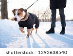 walking with a dog in warm coat ... | Shutterstock . vector #1292638540