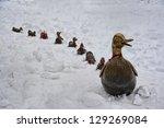 7 Little Ducks In Boston Common