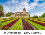 lettuce cultivation on the... | Shutterstock . vector #1292728960