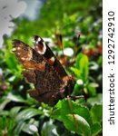 A Macro Of A Butterfly With...