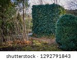 common ivy wall on a decorative ... | Shutterstock . vector #1292791843