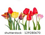 Different Beautiful Tulips...