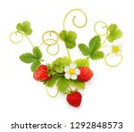 wild strawberry isolated on... | Shutterstock . vector #1292848573