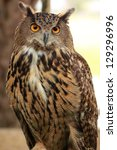 Stock photo eagle owl an eagle owl 129296996