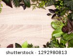 leaves on a light background | Shutterstock . vector #1292980813