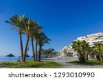 palm trees on a beach in... | Shutterstock . vector #1293010990