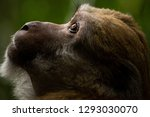 Funny Face Male Monkey