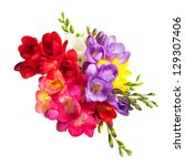 blooming freesia. isolated on... | Shutterstock . vector #129307406