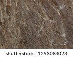 plumage of the darwin's rhea ...   Shutterstock . vector #1293083023