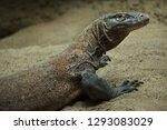 komodo dragon  varanus...   Shutterstock . vector #1293083029