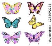 beautiful pink butterfly... | Shutterstock . vector #1293092236