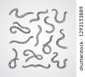 collection of worms.... | Shutterstock .eps vector #1293153889