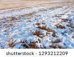 frozen wetland  winter field  a ... | Shutterstock . vector #1293212209