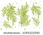 collection of  leaves.abstract... | Shutterstock .eps vector #1293222550