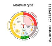 menstrual cycle chart. increase ... | Shutterstock .eps vector #1293395596
