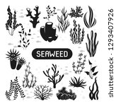 seaweeds. vector illustration... | Shutterstock .eps vector #1293407926