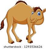 cartoon camel isolated on white ... | Shutterstock .eps vector #1293536626