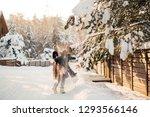 little cute boy is having fun... | Shutterstock . vector #1293566146