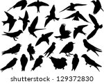 beak,bird,collection,feathers,martin,positions,silhouettes,small,swallow bird,wings