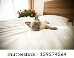 Cat Resting On The Bed