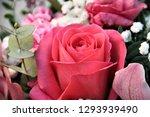 rose bouquet close up   Shutterstock . vector #1293939490