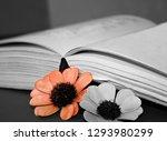 open book close up   Shutterstock . vector #1293980299