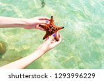 girl holding the starfish on... | Shutterstock . vector #1293996229