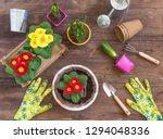 primrose primula vulgaris ...   Shutterstock . vector #1294048336