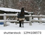 Westphalian Horse In Paddock ...
