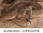western diamondback rattlesnake ... | Shutterstock . vector #1294133956