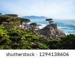 The Lone Cypress Stands As A...