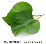 apricot leaves isolated on... | Shutterstock . vector #1294171213