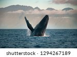 Humpack Whale With Molokai In...