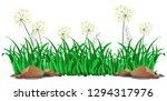 isolated grass on white... | Shutterstock .eps vector #1294317976