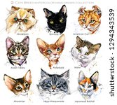 Stock photo cat breeds set cute pets poster cats face collection domestic animal watercolor illustration 1294343539