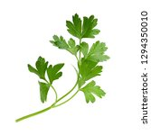 parsley fresh herb isolated on... | Shutterstock . vector #1294350010