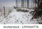 Winter Mists And Snow   Rocks...
