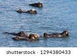 morro bay otter    Shutterstock . vector #1294380433