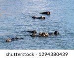 morro bay otter    Shutterstock . vector #1294380439