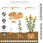 sunflower potato beneficial... | Shutterstock .eps vector #1294400629