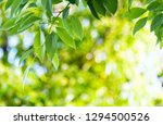 fresh and green leaves... | Shutterstock . vector #1294500526