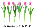 Stock photo studio shot of tulips isolated on white background 129455549
