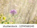spring rain on the meadow in...   Shutterstock . vector #1294568140