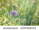 spring rain on the meadow in...   Shutterstock . vector #1294568143