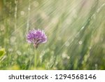 spring rain on the meadow in...   Shutterstock . vector #1294568146